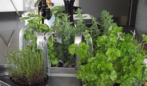FuelIgniteThrive - Grow Your Health With an Herb Garden